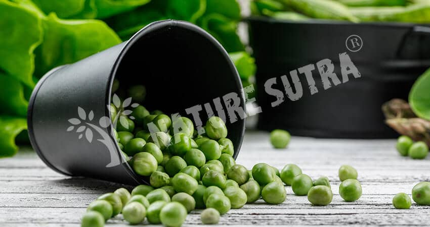 Peas- A Vegan source of High Protein Food