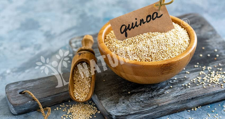 Quinoa - High Protein Sources for Vegetarians