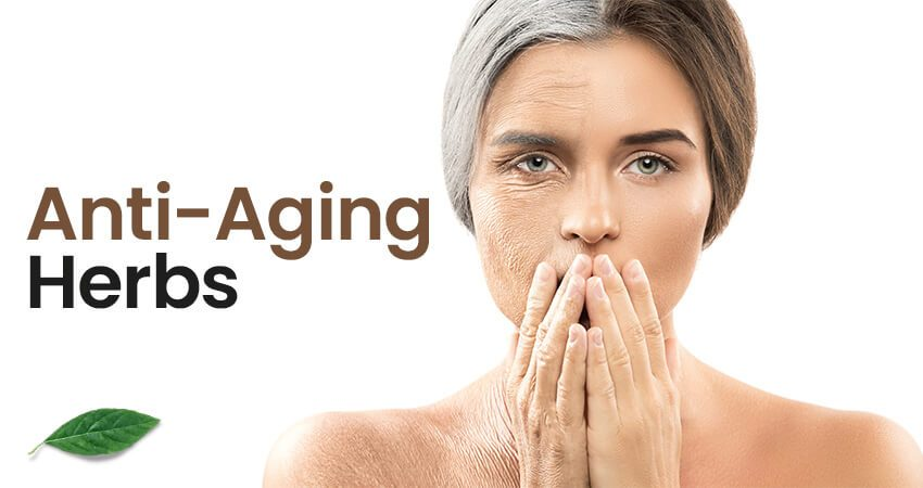 Best Anti-Ageing Herbs in India to Look Younger and Beautiful